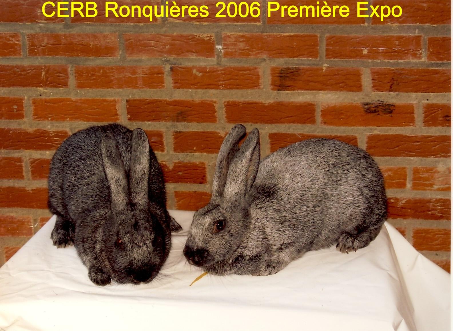 Exposition Ronquières 2006 Lapin Argenté Belge